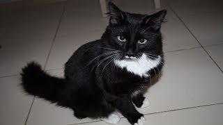 Расплата за кошку. Фото в гробу. Похороненная фотография