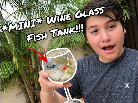 *MINI* Wine Glass Fish Tank!!!