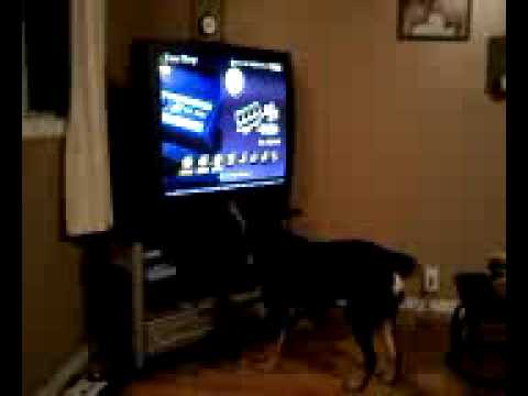 My stupid dog trying to eat a video game.