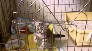 かわいい子猫、脱走の瞬間