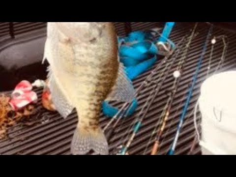 Pescando En Winston Salem NC. Salem. Lake