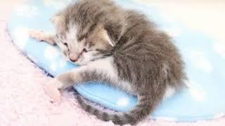 Новорожденным котятам бродячей кошки нужна была помощь!