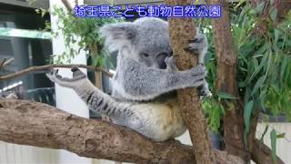 6月20日にコアラの赤ちゃんが誕生する瞬間の撮影に成功しました! 今回...