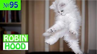 ПРИКОЛЫ 2017 с животными. Смешные Коты, Собаки, Попугаи // Funny Dogs Cats Compilation. Май №95