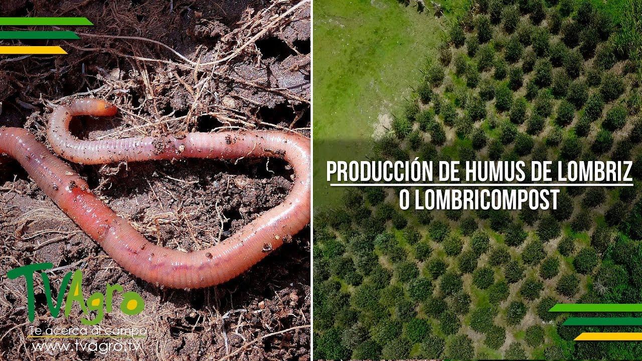 Agroflor Manual Lombricultura Pdf