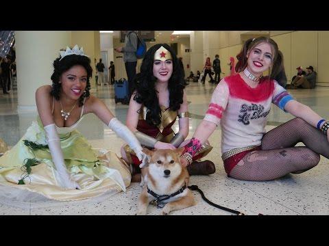 Frog Princess,  Wonder Woman, Harley Quinn and a Cute Dog