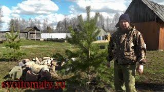 видео Пересадка молодых деревьев
