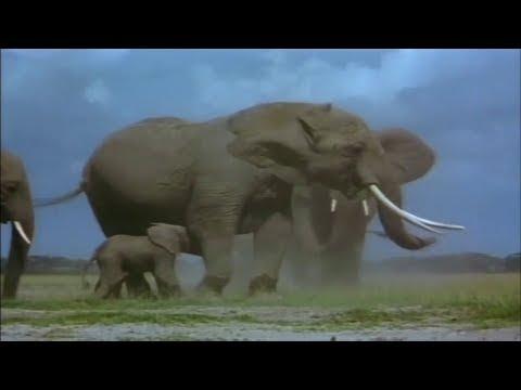 National Geographic Documentary - Life of The Desert Elephant - Wildlife Animals