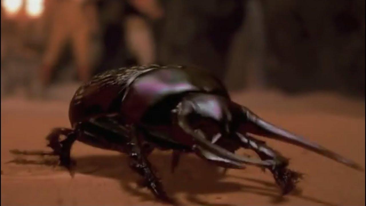 Download Flesh-Eating Scarab Beetles Compilation -The Mummy