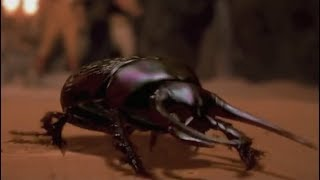 Flesh-Eating Scarab Beetles Compilation -The Mummy