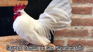 Criadero Sagrada Familia en San Miguel El Alto Ep.43