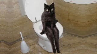 Funniest Cats Ever   Don't try to hold back Laughter   Funny Cats Life #03