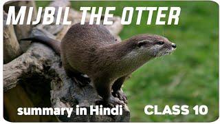 Mijbil The Otter Class 10 th in Hindi  Summary in Hindi  