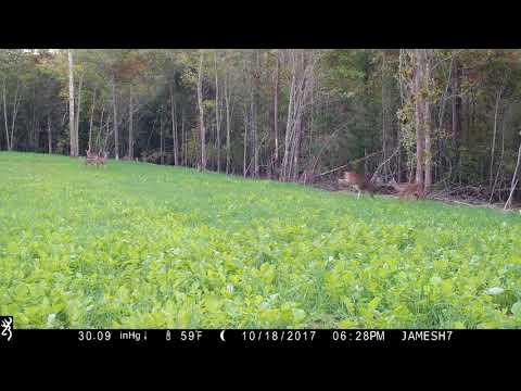 Annual Wildlife Food Plot Action - 1