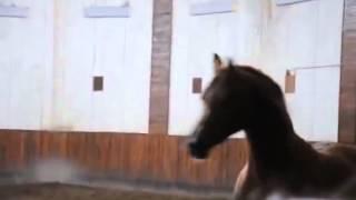 О кличках лошадей и рационе их питания