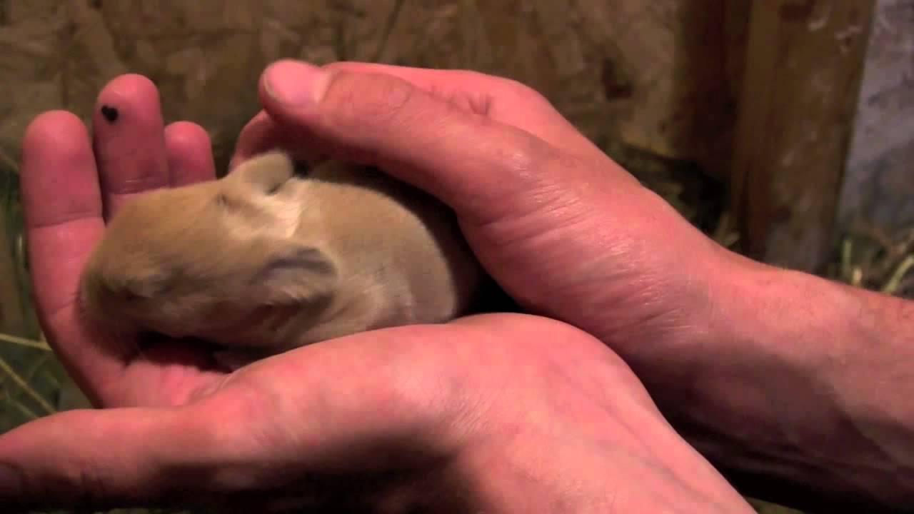 Bayi kelinci angora