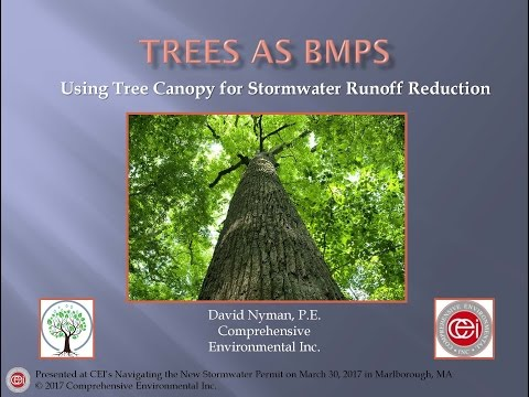 Tree Canopy Stormwater Credit System - MA MS4 Stormwater Permit