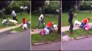 gruesome dog attack caught on camera as witnesses try to pull them off and even hit them