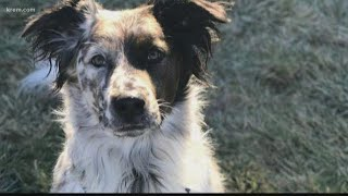 Baixar Spokane City Council working to prevent heated sidewalk accidents after dog's death