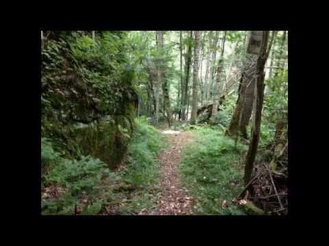 北海道占冠村_赤岩青巌峡遊歩道 コケと赤い巨岩の森を散策