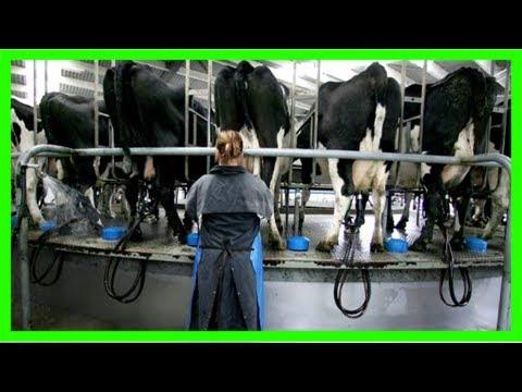 Taranaki farmers seeking compensation lose interest swaps case