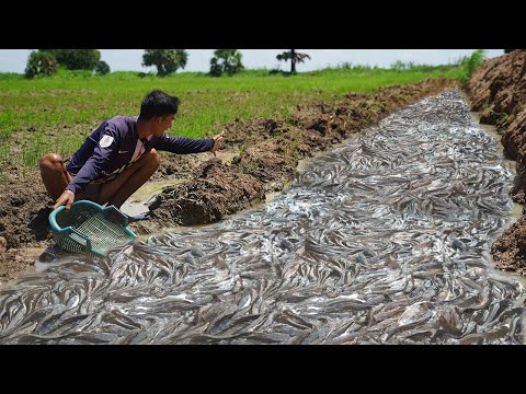 Awesome Catching In Season Dry 2021 - Search U0026 Found Many Snakehead Fish U0026 Catfish In Dry Canal