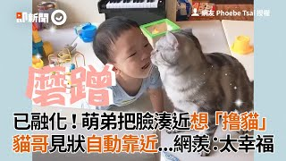 弟弟把臉湊近想「撸貓」 貓哥見狀自動靠近蹭蹭|寵物|貓咪|寶寶
