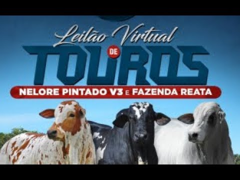 LOTE 147