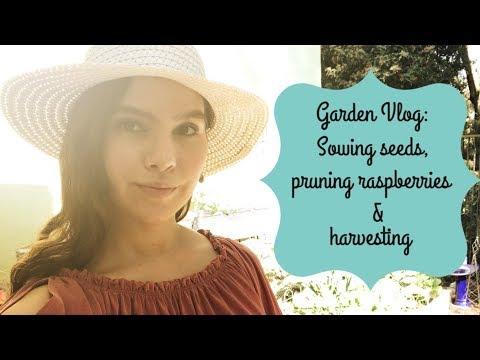 Garden Vlog: Sowing Seeds, Pruning Raspberries, & Harvesting Winter Veggies