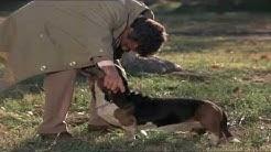 Columbo und sein Freund Hund