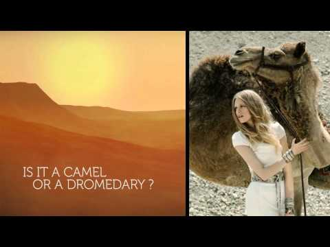 Is it a Camel or Dromedary ?