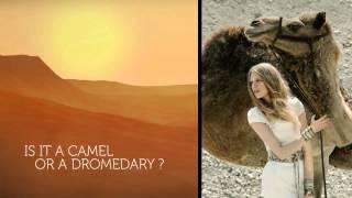 Is it a Camel or Dromedary ?