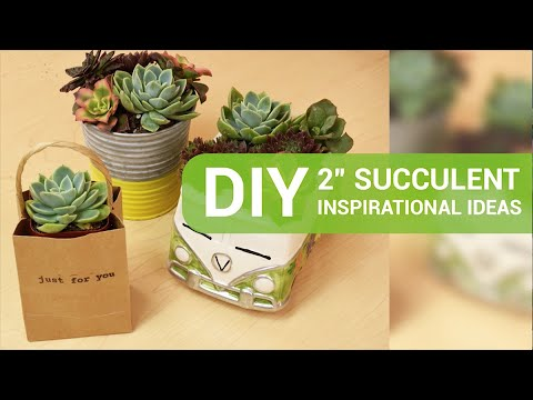 "DIY inspiration starring 2"" succulents"