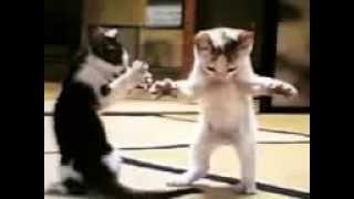 Прикольные танцы кошек!!! dancing cats. Коты танцуют