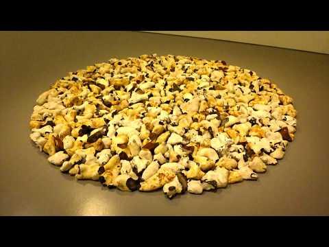 Hirshhorn Museum and Sculpture Garden   2015