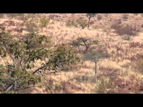TWSA 2011 Episode 12 Namibia Plains Game