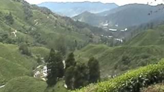 Malaysian Tea Plantation