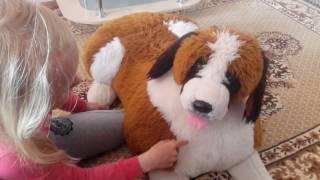 Знакомства и моя подруга бешеная ка бутан издеваться  над собакой игрушечной 😂😂😊😊😊😊😁🐕🐕🐶