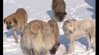 Приют для бездомных собак появится в Красноярске