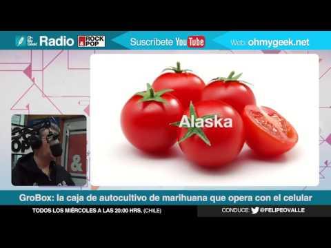 OMG! Radio: GroBox, la caja para el cultivo casero de cannabis automatizado desde el celular