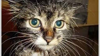 Gato cai dentro da caixas d