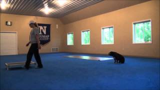 Thor (english Bulldog) Trained Dog Boot Camp Video