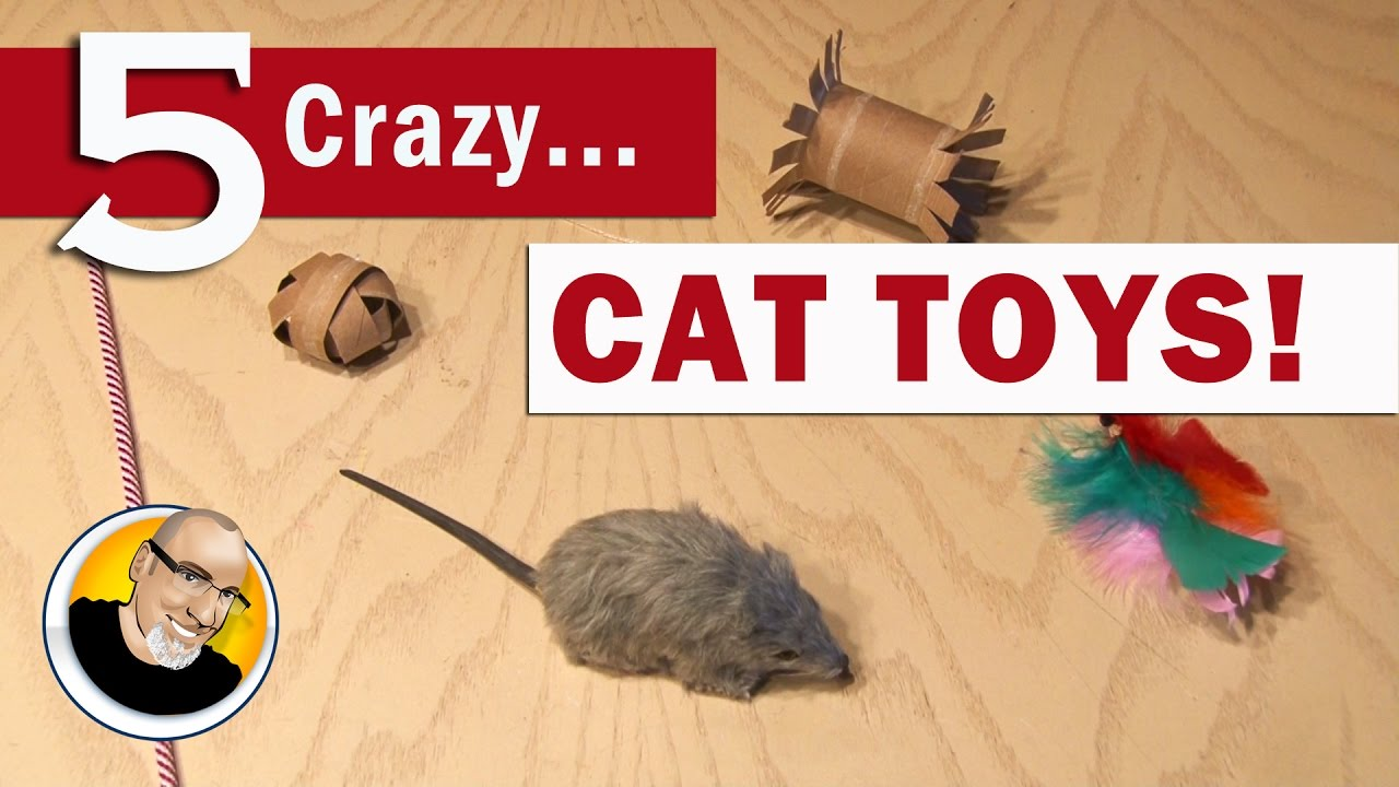 5 crazy cat toys you can make youtube for Kitten toys you can make