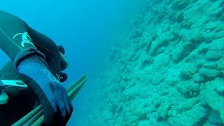 zıpkınla balık avı yaz başlangıç, zıpkın avı, balık avı, spearfishing, ömer bırak