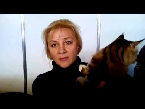 Отзывы о средстве для удаления запаха мочи от кошек «DuftaPet»