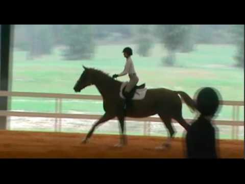 Maria Hackney NCAA Equestrian Recruitment Video