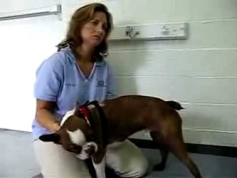 Cal Animal Rehab Tripawds Interview Interview #2