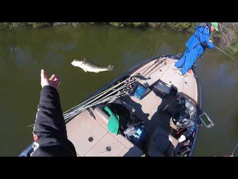 Prespawn Fishing At Lake Holbrook