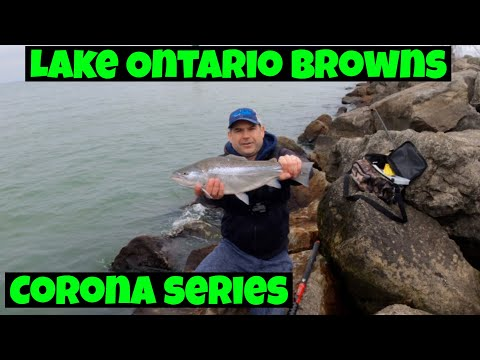 Spring Browns On Lake Ontario(bonus Carp)