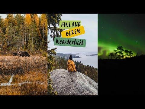Video: 3 berenwelpjes en het noorderlicht in Finland.